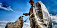 Bir Çobanın Maaşı Ne Kadar Olabilir?